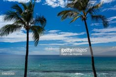 Stock Photo : A distant stand-up paddleboarder on the ocean between two palm trees.