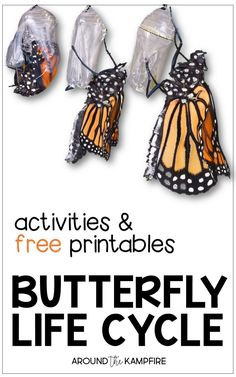6 Life Cycle Of A butterfly Printables 2 Butterfly Life Cycle Resources & Free Printables √ Life Cycle Of A butterfly Printables 2 . 6 Life Cycle Of A butterfly Printables 2 . butterfly Life Cycle Resources & Free Printables in