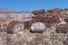 Petrified Forest — Holbrook, Arizona | 17 Incredible Things On Route 66 You Have To See To Believe