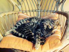 Closeness cats2