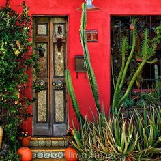 It's brash and bold, but the flame-colored wall color does show off the cactus and succulents! Old Doors, Windows And Doors, Tucson Hotels, Open Door Policy, Portal, Mexico Style, Mediterranean Garden, Southwest Style, Winter House