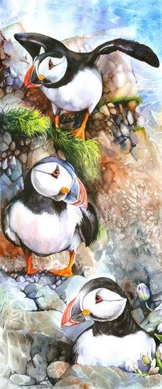 Puffins Rock by Peter Williams on ARTwanted Watercolor Bird, Watercolor Animals, Watercolor Paintings, Watercolors, Beautiful Artwork, Beautiful Birds, Puffins Bird, Bird Drawings, Sea Birds