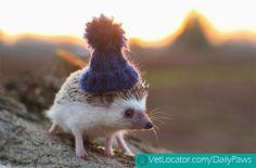 hedgehog-with-hat-04.jpg (500×329)
