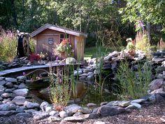 Pond in my back yard