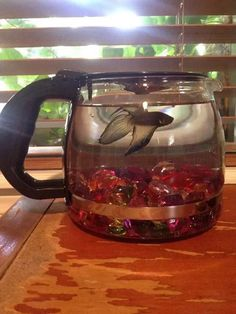A coffee pot fish bowl