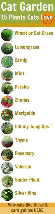 (3) Timeline Photos - Step Into Enchanted Gardens w.Barbara Keen
