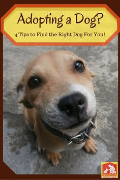 October is Adopt-a-dog month!  Thinking of adopting a dog this month? Here are 4 tips you should consider: http://dog-training-columbia.com/adopt-a-dog-tips