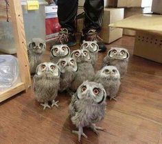 Freakin little owls are so cute!!
