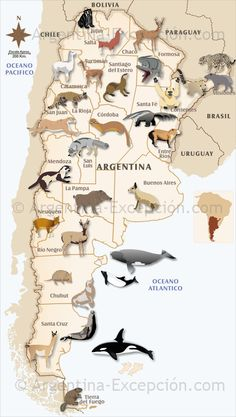 More animals of Argentina in an interesting map 🗺 Ushuaia, South America Animals, South America Map, Latin America, Vietnam Travel, Thailand Travel, Argentina Animals, Argentina Culture, Argentina Live