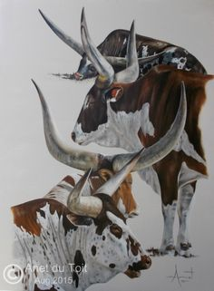 Watusi's Oil on stretched canvas 76cm x 101cm Available. Contact me on anetdutoit@gmail.com