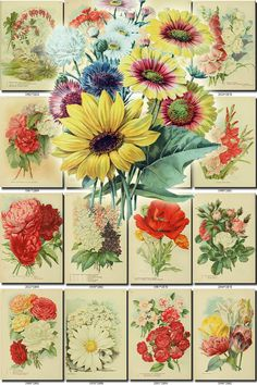 FLOWERS-162 Collection of 125 vintage images Windflower Deutzia Edleweis Roses Glow Paeony botanical pictures High resolution digital flower           data-share-from=listing        >           <span class=etsy-icon