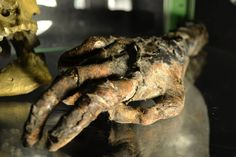 Mummified hand ( Halloween prop ) By Reliquaryimpressions.com