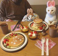 バレンタインの代わりに❤︎ 八『もう、写真撮った?』 おこ『お母はん早よ撮って!早よ食べよ!』 キャナダのメープルシロップで食べるっ🇨🇦 皆さま、よい週末を〜🐇❤︎🐇❤︎ #ホットケーキ #ホットケーキタワー #八おこめ #ねこ部 #cat #ねこ #八おこめ食べ物 #八おこめズラ #うさぎ