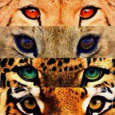 Cool cat eyes