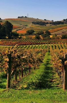 Vines 101: A History of Napa Valley Wine.  http://www.butterfield.com/blog/2014/07/17/vines-101-history-napa-valley-wine/  #travel #Napa #Valley #wine #guide #drink #holiday #vacation #trip #myBNR