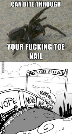 Aussie funnel web, and it's lethal too. Really Funny Memes, Stupid Funny Memes, Funny Laugh, Funny Relatable Memes, Funny Posts, Funny Animal Memes, Cute Funny Animals, Australian Memes, Funny Images