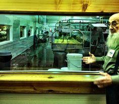 Heini's Cheese factory