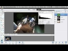 Photoshop Elements 11 Tutorial | Working with Tonal and Color Correction