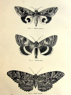 1860 antique moths butterflies print, original vintage moth plate, french lepidotera engraving, papillon butterfly illustration.