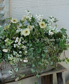 tef*tef*寄せ植え5月まで楽しめる!* no.106 *『メロンパン』白緑系♪ | 寄せ植え | | Junk sweet Garden tef*tef*