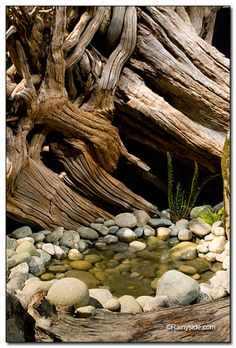 weathered roots, contorted trees, and water