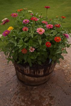 Container gardening is a fun way to add to the visual attraction of your home. You can use the terrific suggestions given here to start improving your garden or begin a new one today. Your garden is certain to bring you great satisfac Container Flowers, Flower Planters, Container Plants, Garden Planters, Container Gardening, Flower Pots, Garden Yard Ideas, Lawn And Garden, Garden Projects