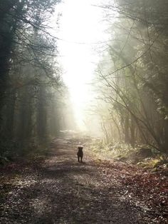Winnie . forest of dean morning rays