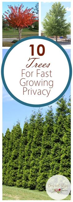 67 Trendy Ideas For Backyard Privacy Landscaping Trees Spaces Backyard Trees, Backyard Shade, Landscaping Trees, Privacy Landscaping, Backyard Plants, Backyard Fences, Privacy Ideas For Backyard, Shrubs For Privacy, Luxury Landscaping