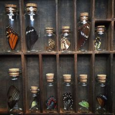 Tiny collections of butterfly wings. by thenaturalistmelb Curiosity Cabinet, Cabinet Of Curiosities, Natural Curiosities, Nature Collection, Cork Stoppers, Witch Aesthetic, Displaying Collections, Butterfly Wings, Wiccan