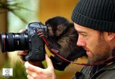 monkey assistant