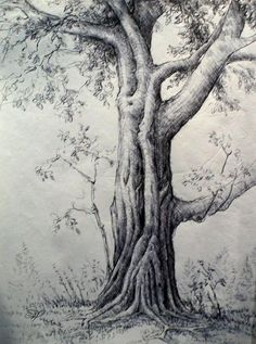 To be an artist tree pencil sketch, nature sketches pencil, tree drawings p Tree Pencil Sketch, Tree Drawings Pencil, Pencil Drawings Of Nature, Pencil Trees, Tree Sketches, Pencil Drawing Tutorials, Realistic Drawings, Drawing Trees, Drawings Of Trees