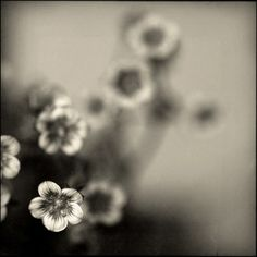 Saxifrage by aufilde on Etsy, $35.00