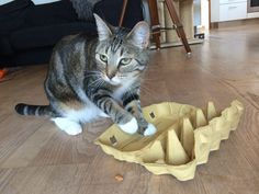 DIY treat mazes and activity toys for your cat. Snacktivity!