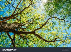 tree branches leaves nature night sun light sunset blur - Google Search