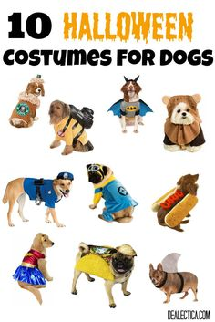 Oh my goodness! These are the cutest dog Halloween costumes ever! 10 Halloween Costumes For Dogs