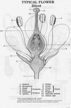Diagram quiz on flower parts interactive online quiz biology flower anatomy ccuart