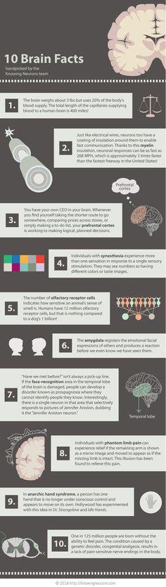 10 δεδομένα για τον εγκέφαλο