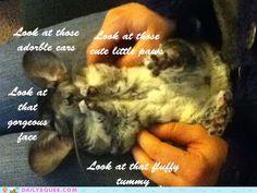 Why I want a chinchilla