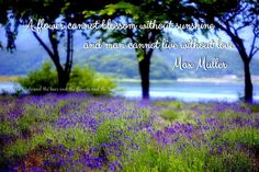 A flower cannot blossom without sunshine and man cannot live without love.  ~ Max Muller