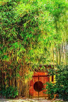 Ritsurin Garden in Takamatsu, Kagawa, Japan 栗林公園