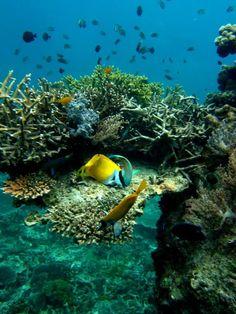 Diving in Pulau Aur, Malaysia