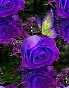 By Artist Unknown. Galaxy Phone Wallpaper, Flower Phone Wallpaper, Butterfly Wallpaper, Butterfly Art, Butterfly Background, Beautiful Rose Flowers, Pretty Roses, Beautiful Butterflies, Purple Love