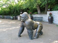 Phil the Gorilla sculpture  This bronze sculpture was created by William Timym and donated by  Sidney Cohen in 1985.  It is located in the Jungle of the Apes plaza.   Saint Louis Zoo.