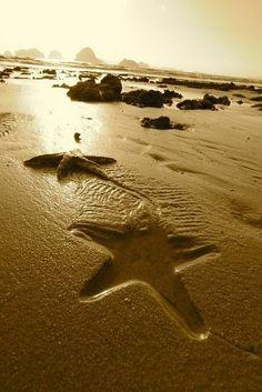 Sea Star on the move