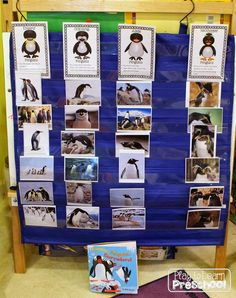 Polar Animals Unit - Sorting penguins by their species at Play to Learn Preschool