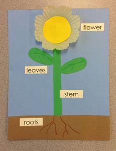 Parts of a Flower Craft for Kids visit www.letsgetreadyforkindergarten.com