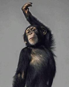 Little Orangutan print on canvas Cute Baby Animals, Animals And Pets, Funny Animals, Beautiful Creatures, Animals Beautiful, Regard Animal, Orang Utan, Fluffy Cows, Monkey Art