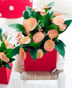 Imagenes de plantas de interior que necesitan poca luz - Los penotes decoracion ...