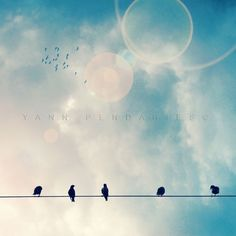 Birds on a wire, Bird print, Animal print, Nature photography, Blue... ($18) ❤ liked on Polyvore featuring home, home decor, wall art, textured wall art, photographic wall art, photography wall art, photo illustration and photo picture