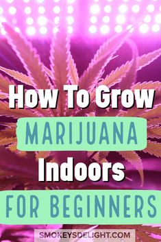 Instructions for beginners on how to grow marijuana indoors, from germination (seed starting) to harvesting.A step by step guide for everything you need. Weed Facts, Marijuana Facts, Growing Marijuana Indoor, Cannabis Growing, Cannabis Edibles, Cannabis Plant, Growing Weed Indoors, Cannabis Cultivation, Growing Vegetables